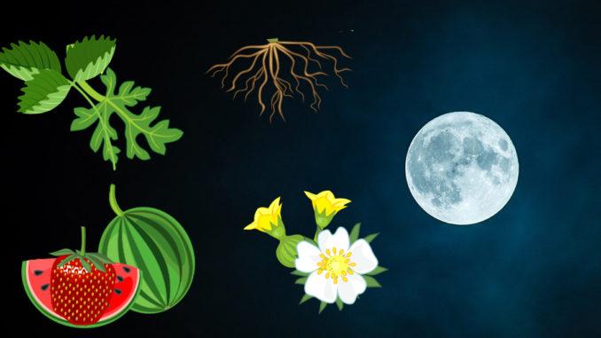 Calendrier Lunaire 2020 Jardiner Avec La Lune Plantes Et Jardins