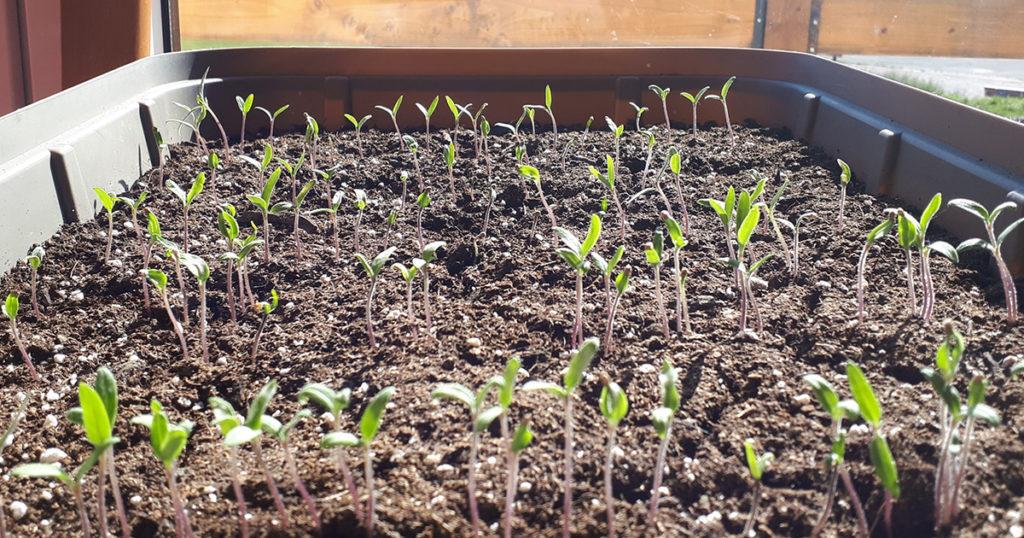 semis sans étiquettes