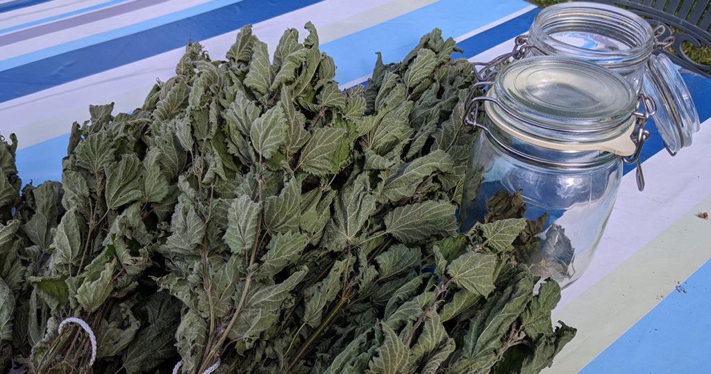 feuilles d'orties sèches