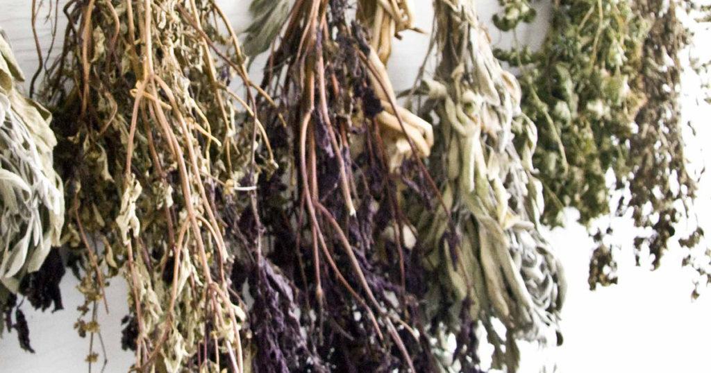 herbe qui sèche