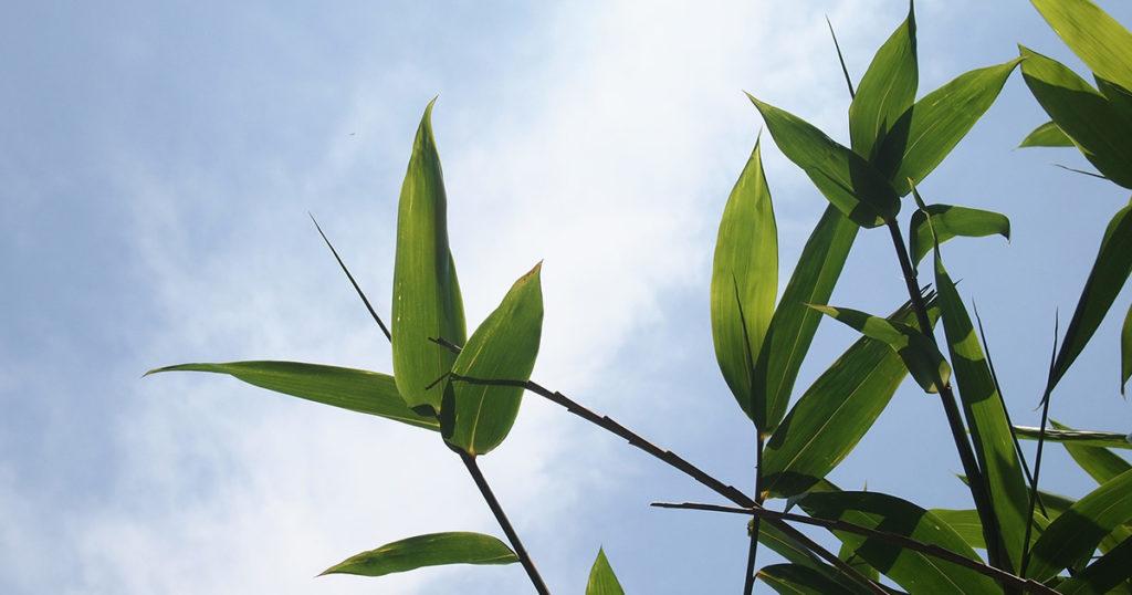 ombre grâce au bambou