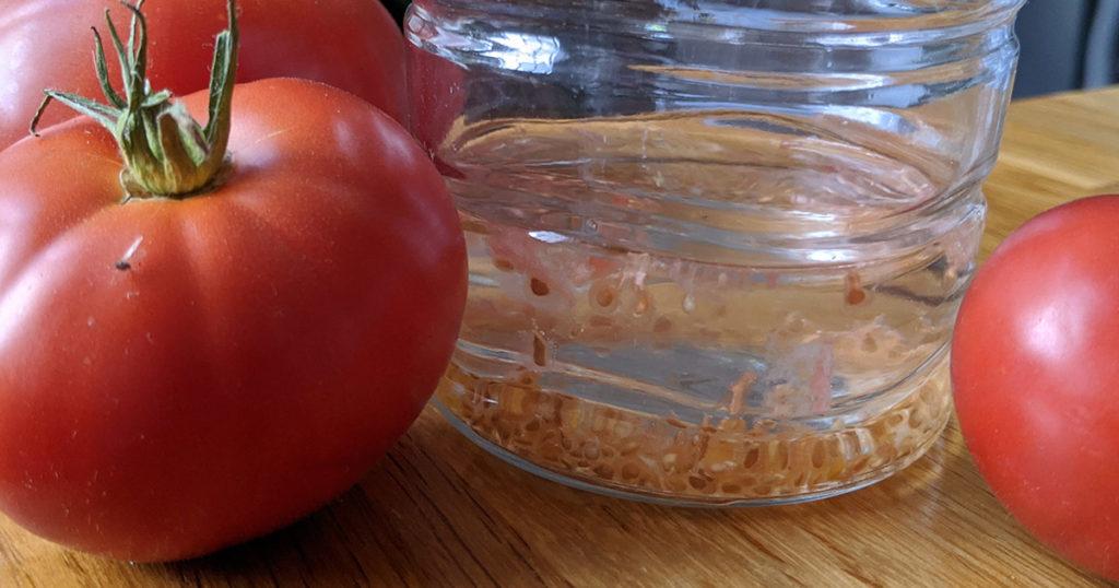 mettre les graines dans un verre d'eau