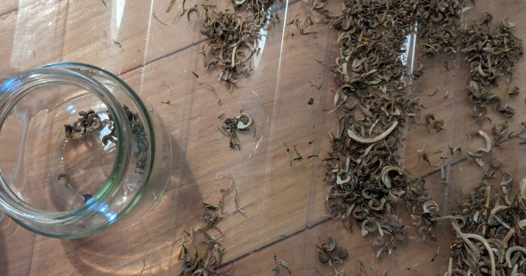 fleurs de soucis : les graines sont sèches