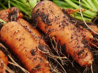 Conserver les carottes : astuces